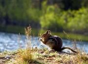 640x360_wildlife